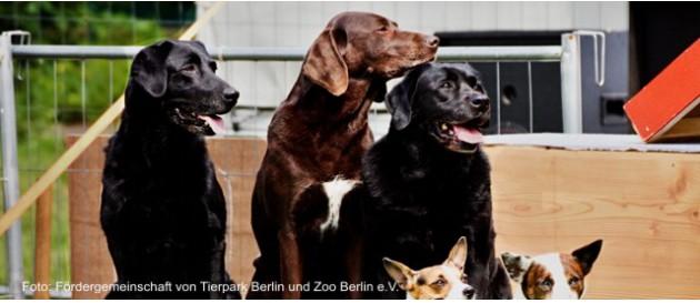 2017 06 24 tierpark hundetag